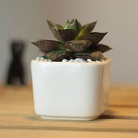 Click to view details for Flower Pot (1515145)