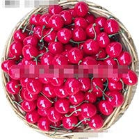 Click to view details for Artificial Fruit (1735762)