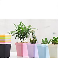 Click to view details for Flower Pot (1774479)
