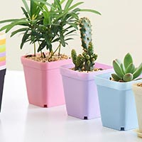 Click to view details for Flower Pot (1774493)